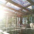 Logu plēves pret sauli